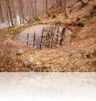 Γούρνα στο δάσος κατηφορίζοντας για Πουρί.