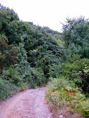 Ο αγροτικός δρόμος βόρεια του Οβριού κινείται σε οργιώδη βλάστηση και σε πολλά σημεία στενεύει πολύ.