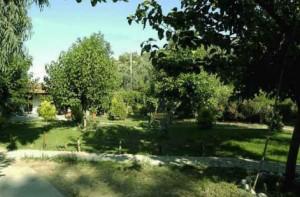 garden-bunga